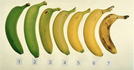 Guess Which Of These Bananas Is Better For You— Ripe Or Unripe? | The Basic Life | Scoop.it