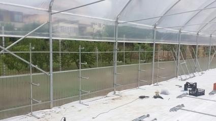 Impianto RTW multilivello per la coltivazione del fagiolino   HYDROINVENT s.r.l.   Idroponica   Scoop.it