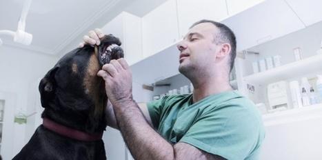 La mauvaise haleine, aussi un mal de chien | CaniCatNews-santé | Scoop.it