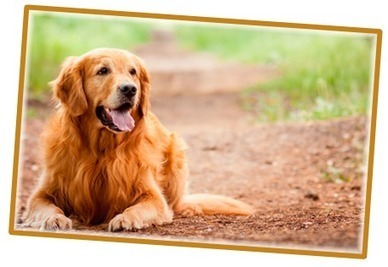 Hounds Dog Walking & Pet Services in Farnborough. | London trades and trusted companies | Scoop.it