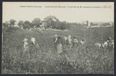 #geneatheme : Une carte postale de Frontignan début XXè - genBECLE.org   Auprès de nos Racines - Généalogie   Scoop.it