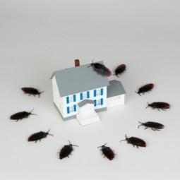Quality Pest Control Service in Albuquerque | Swat Team Pest Control | Swat Team Pest Control | Scoop.it