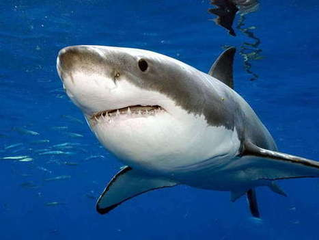 10 Most Dangerous Sea Creatures   The Most 10 Of Everything   underwater robots & dangers   Scoop.it