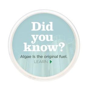 All About Algae   economics   Scoop.it