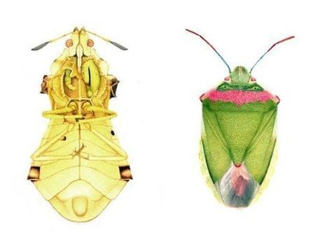Detailed Illustrations of Mutated Insects Challenge the Science Of Nuclear Power | Anthropocene, Capitalocene, Chthulucene,  staying with the trouble at Fukushima | Scoop.it