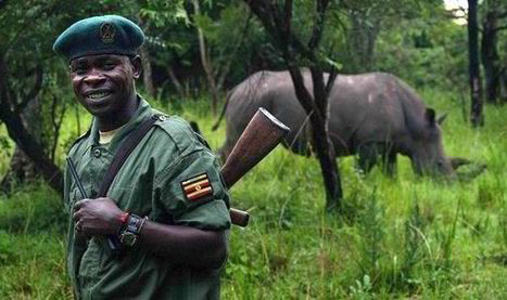 Armed guards on patrol 24/7 at rhino sanctuary as poaching ... | Rhino Conservation | Scoop.it