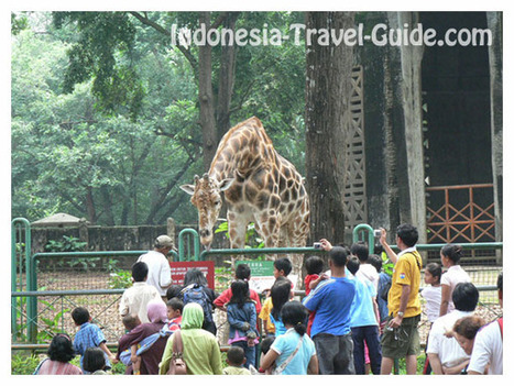 RAGUNAN ZOO - Indonesia-Travel-Guide.com   Geography   Scoop.it