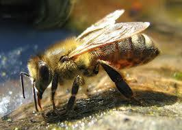Honey bees can be trained to detect cancer - Dezeen | States of matter | Scoop.it