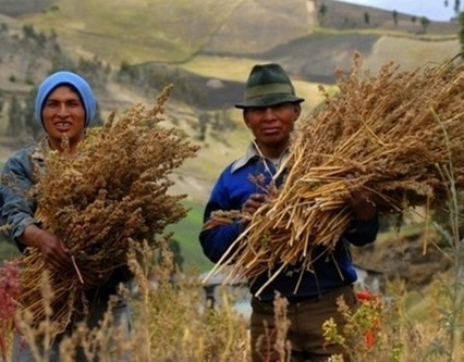 Can Healthy Food Eaters Stomach the Uncomfortable Truth About Quinoa? | Sustainable Futures | Scoop.it