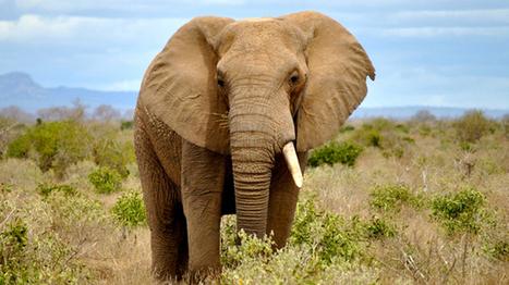 Poachers kill more than 300 elephants in Zimbabwe's largest game ...   Elephants   Scoop.it