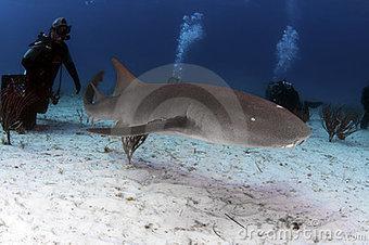 Nurse Shark   Undersea Discoveries   Scoop.it