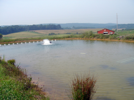 Pond Aquaculture - Related Costs and Dissolved Oxygen Management | Aquaculture | Scoop.it