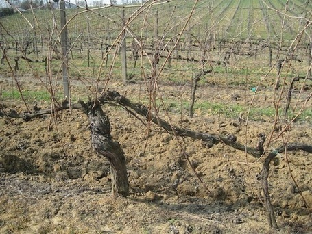 A Spaniard in Italy—Tuscan Tempranillo | Wine website, Wine magazine...What's Hot Today on Wine Blogs? | Scoop.it