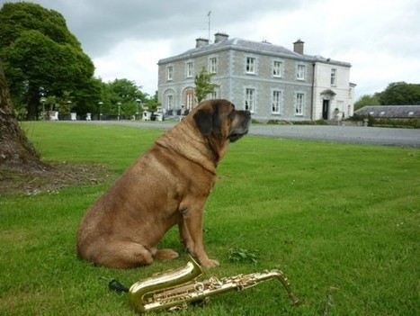 Irlande : des hôtels dogs friendly !   La chronique de Voltaire - Blogs   Tourisme d'affaires   Scoop.it