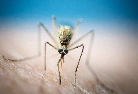 Futurity.org – Engineered bacteria kill malaria parasite | Viruses and Bioinformatics from Virology.uvic.ca | Scoop.it