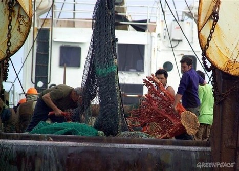World Fishing - Bottom trawling will not be phased out | Lorraine's Environmental Change &  Management | Scoop.it