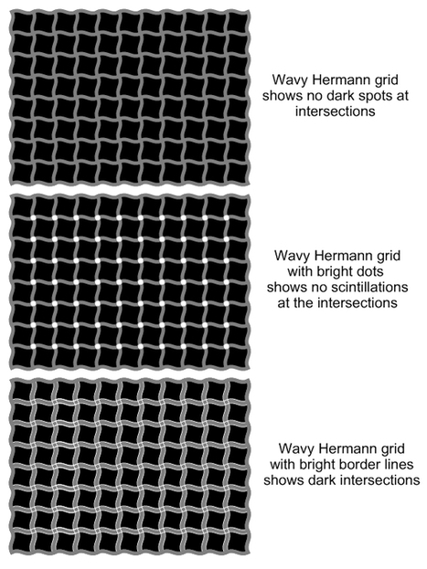 The Science of Optical Illusions | The brain and illusions | Scoop.it