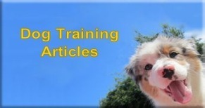 Dog and Puppy Training, Information and dog product reviews | Dog Traning | Scoop.it