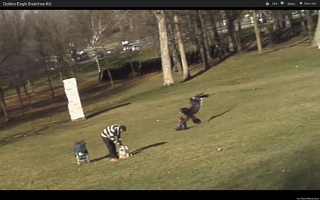 WATCH: Eagle Snatches Baby?! | Xposed | Scoop.it