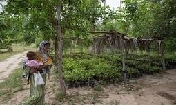 Don't underestimate local NGOs - they showed us how to plant 1.5m trees | Démocratie en ligne, participative et délibérative | Scoop.it