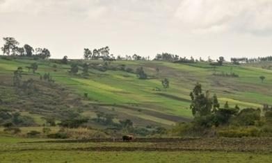Regreening program to restore one-sixth of Ethiopia's land   Global Food Security News   Scoop.it