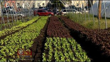 Small City Farms May Get Huge Tax Breaks - CBS Local | Cityfarming, Vertical Farming | Scoop.it