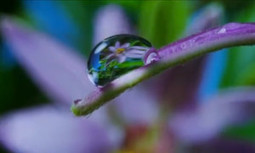Beauty Is Nature's Tool for Survival (Prepare to Be Wowed)   EcoWatch   Scoop.it