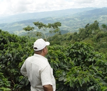 Eco-farm tourism brings economic boost to coffee country | Habitats durables et écologiques | Scoop.it