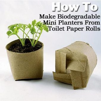How To Make Biodegradable Mini Planters From Toilet Paper Rolls - | Craft Ideas | Scoop.it