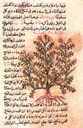 Literatura médica Islámica en al-Andalus | Al-Ándalus | Scoop.it