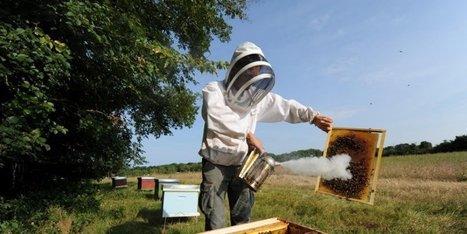 Mortalité des abeilles: les députés votent l'interdiction totale des insecticides néonicotinoïdes | Agriculture en Dordogne | Scoop.it