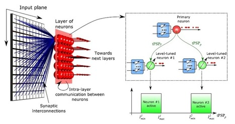 Neuromorphic computing mimics important brain features | Amazing Science | Scoop.it