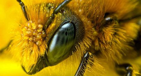 La Russie avertit les États-Unis : la disparition des abeilles provoquerait une 3ème guerre mondiale | Sustain Our Earth | Scoop.it
