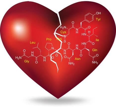 Tribu Global - Formas en que la oxitocina afecta tus comportamientos sociales   Salud   Scoop.it