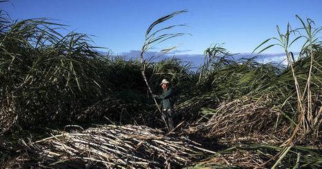 La Réunion, la promesse d'une île - le Monde | Actualités écologie | Scoop.it