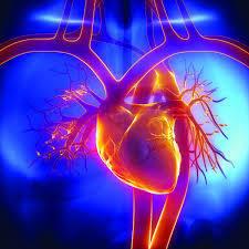 Valvular Replacement in Coimbatore | Heart Valve Repair in India | Heart Disease Treatment | Scoop.it