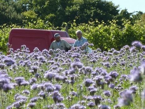 Des Fleurs pour les Abeilles - jachères fleuries | apiculture | Scoop.it