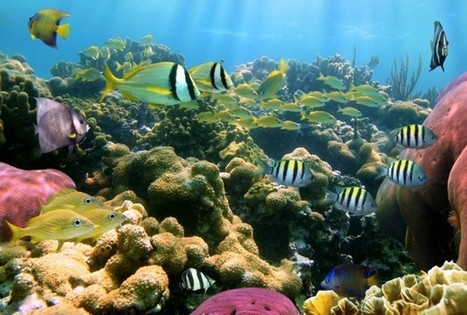 Coral Can Have Too Much Of A Good Thing   Climate change challenges   Scoop.it