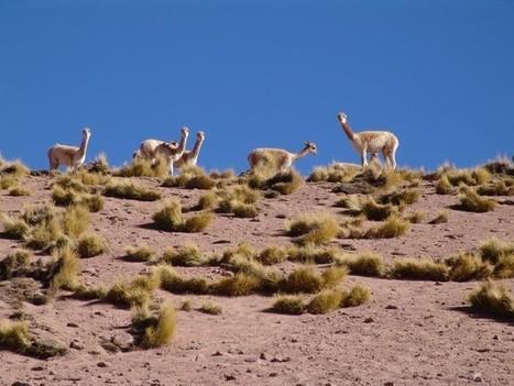 Atacama, un désert à découvrir avec ses habitants | Tourisme et Tendances | Scoop.it