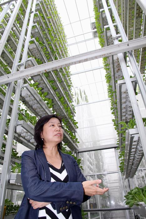 High-tech vegetable farms grow up - The Japan Times | Cityfarming, Vertical Farming | Scoop.it