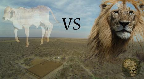 Livestock VS Predators | Cats Rule the World | Scoop.it