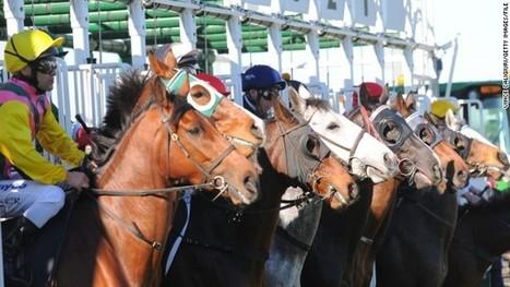 Racing's battle of the sexes -- on four legs | horse-celebrities | Scoop.it