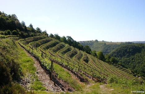 Laissez-vous guider sur la Route des vins de l'Aveyron   Infos tourisme en Aveyron   Scoop.it