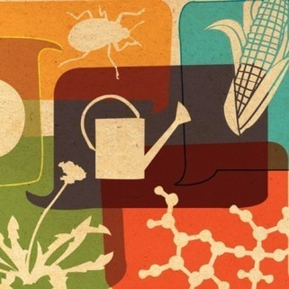 GMOs, Silver Bullets and the Trap of Reductionist Thinking | Sustainability Science | Scoop.it