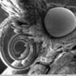 Fuck Yeah Electron Microscope | Amazing things - sometimes science related | Scoop.it