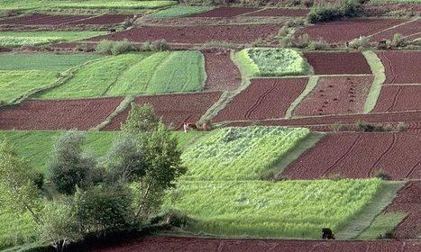 La Berd appuie «Éléphant Vert» au Maroc - Le Matin | Agriculture et Alimentation méditerranéenne durable | Scoop.it