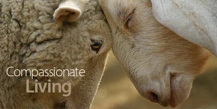 Compassionate Living // Animals Australia | Earth Island Institute Philippines | Scoop.it