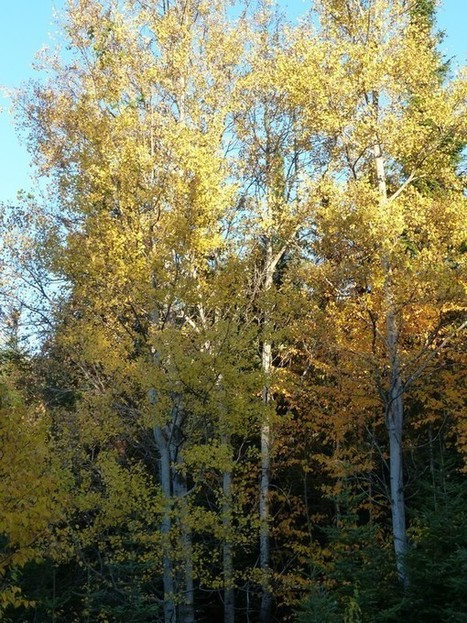 La vie en jaune ou la couleur jaune s'invite dans la campagne québécoise à l'automne | Faaxaal Forum Photos gratuite Faune et Flore | Scoop.it