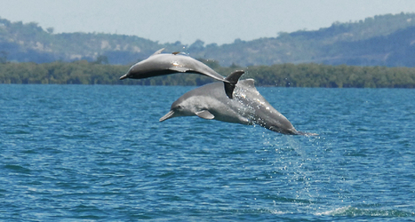 New dolphin species gets a name | Science News | All about water, the oceans, environmental issues | Scoop.it