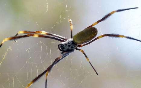 Biomimétisme : des toiles d'araignées pour isoler du bruit | Vous avez dit Innovation ? | Scoop.it